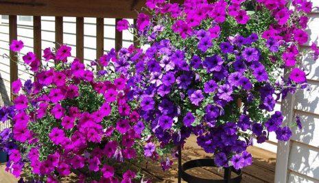 Le piante più belle per il terrazzo o balcone