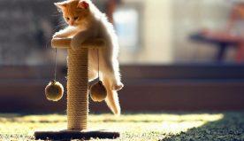 Giocattoli per animali domestici: quali sono i migliori