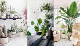 La natura in casa: quali piante da appartamento scegliere