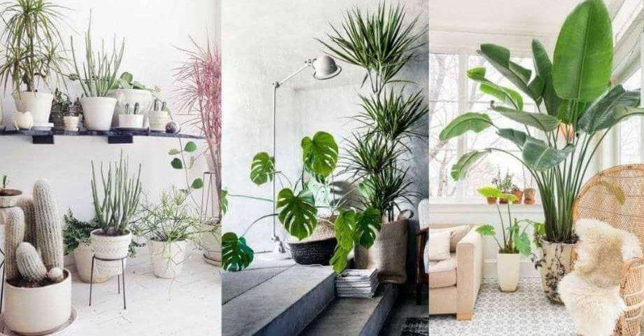 Migliori Piante Da Appartamento.La Natura In Casa Quali Piante Da Appartamento Scegliere