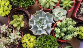 Piante da esterno: grasse, con fiori e tante altre ancora