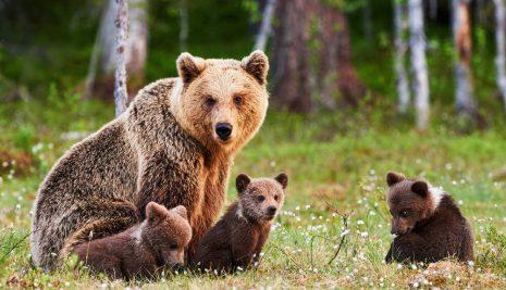 Animali in via di estinzione in Italia: quali sono a rischio di estinzione?