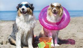 Vacanze con animali, i luoghi più adatti per gli amici a 4 zampe