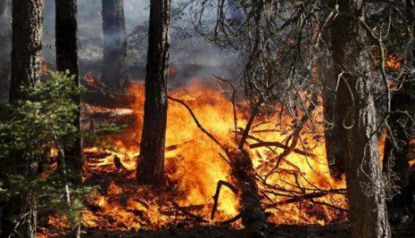 Come prevenire gli incendi boschivi: cosa fare ed a chi rivolgersi
