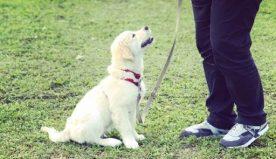 Addestramento cani: alcuni metodi ed esercizi per il tuo pet